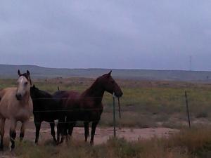 redtophorses